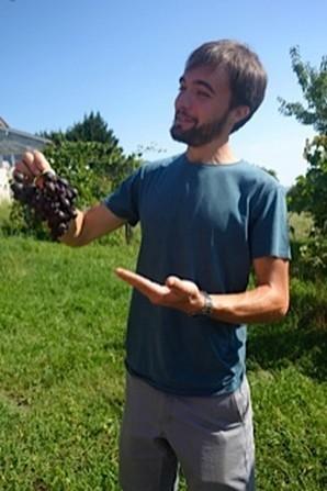 """Jérémy Estoueigt présente une grappe abimée par les piqûres de la mouche """"drosophile Suzuki"""" ou du frelon asiatique"""