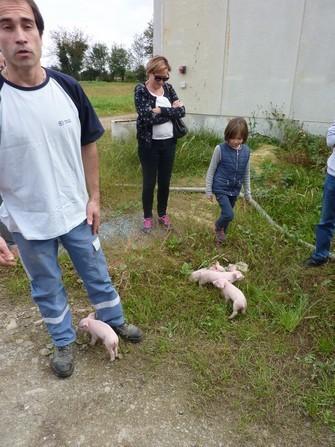 A la ferme Bergeras , ce sont les tout jeunes porcelets qui ont attendri les enfants.