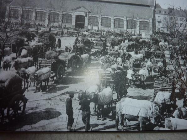 Au début du XXème siécle la béarnaise était appréciée pour le travail et le transport. Ici le marché au bois de Pau.