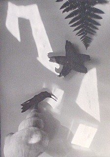 Jaromir Funke:  Still-life (with starfish and bird), 1927-28 / 1995 Part of portfolio