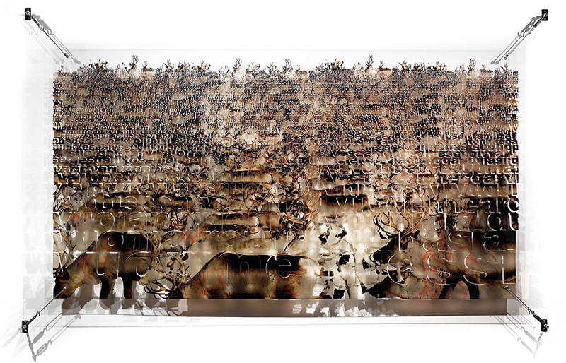 Mika Saijets´ 520 reindeer, 2011 Ink print on 2 mm flexible metacrylate. Superimposed two layered image. 110 x 200 x 8 cm