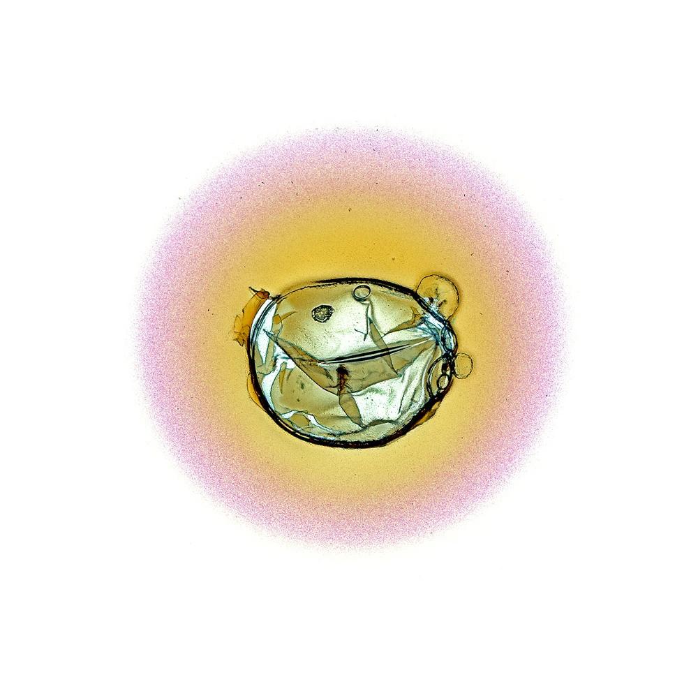 Sonne #63, 2002