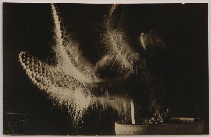 Frantisek Drtikol: Kaktus, 1930 -  Vintage