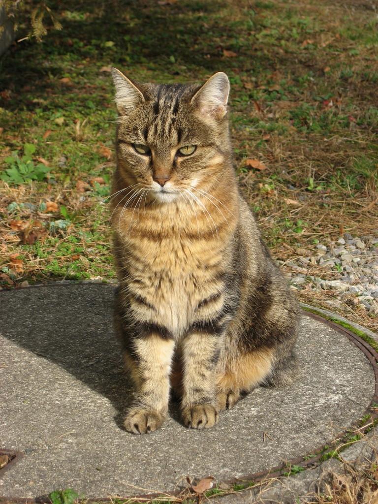 Gipsy...jetzt im Katzenhimmel