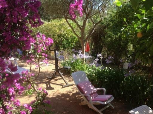 Le jardin en juillet - La maison de Ninette -