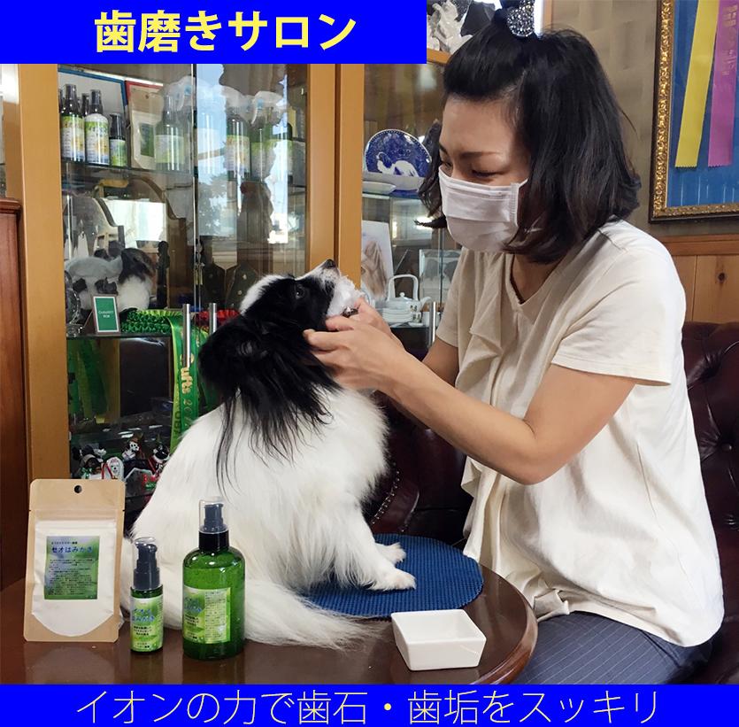犬無麻酔歯石除去 犬ハミガキ 犬歯磨き