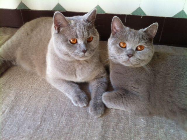 Emmi und Ila, Beratung wg. Schwangerschaft