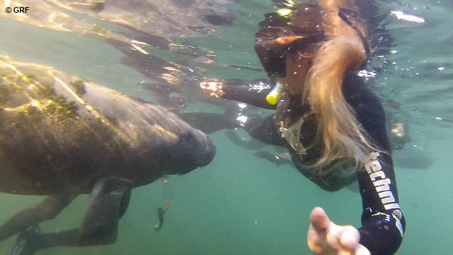 FLORIDA con i lamantini di Crystal water