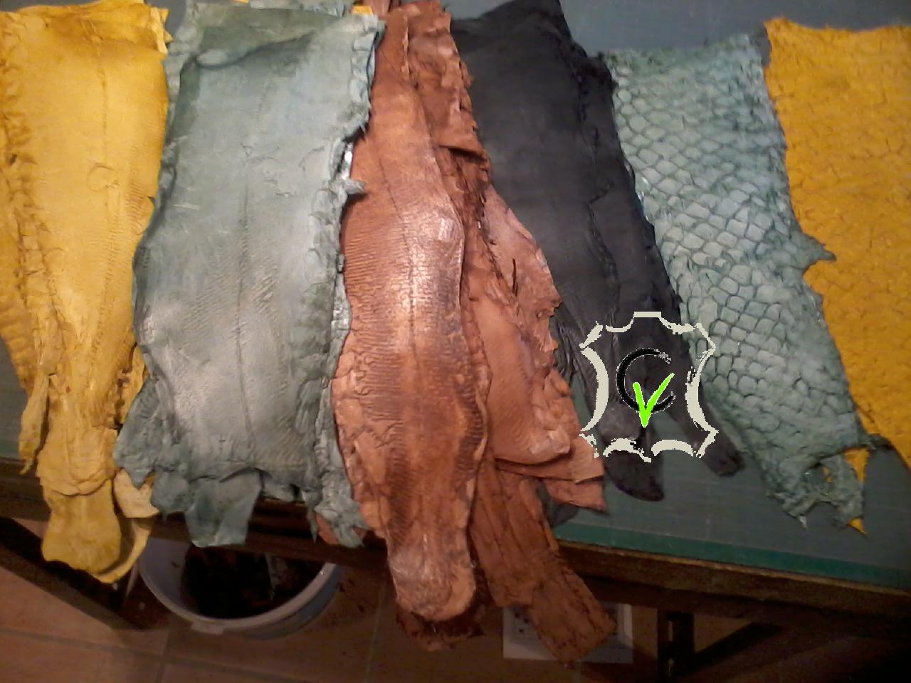 cuir de Carpes de Dombes teinté et naturel, carpes cuir et carpes écailles