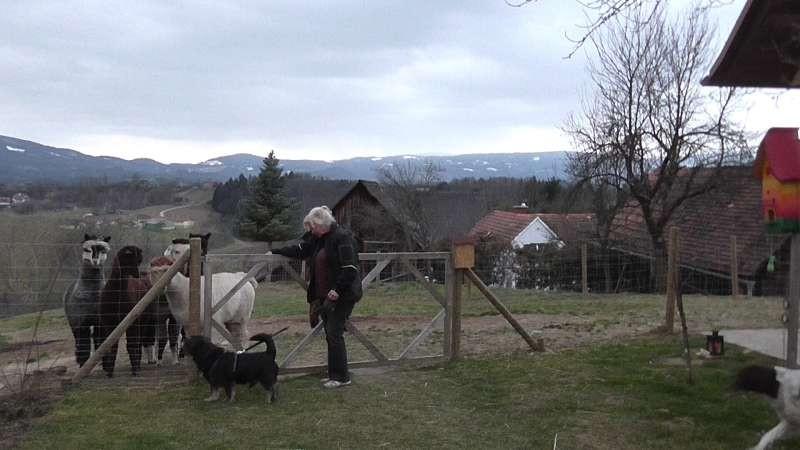 Ich bin gerade auf dem Alpakahof angekommen...