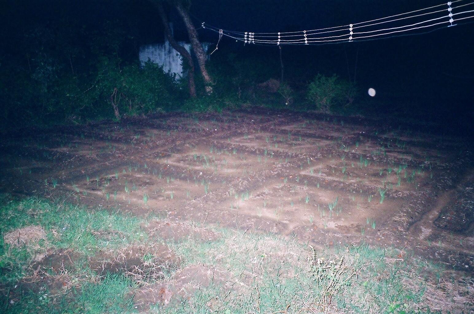Décembre 2005 - Le champ d'oignons de Idithangi Mariamman est à nouveau inondé