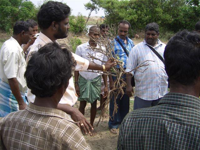 Décembre 2005 - Les racines des arbustes sont rongées par le sel