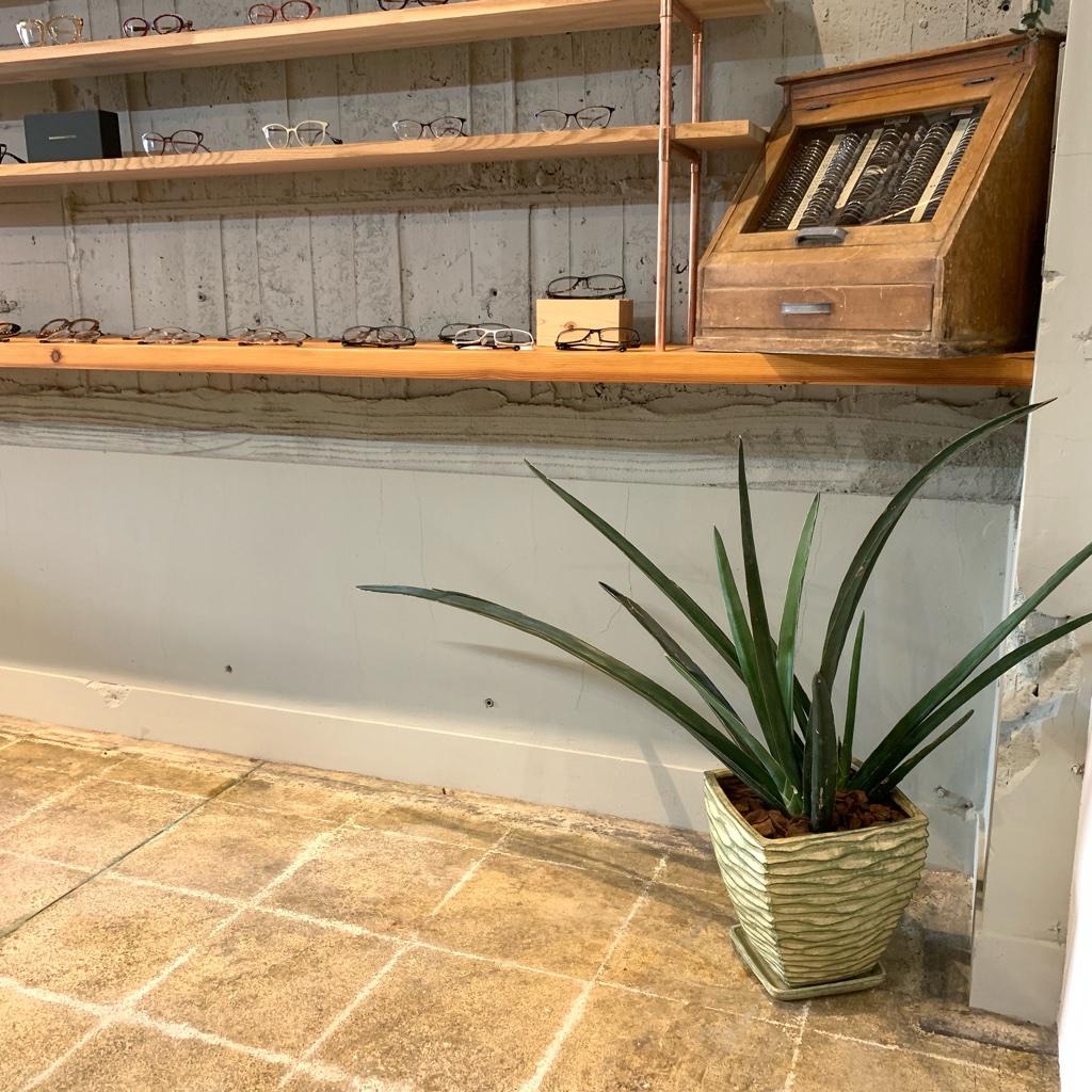 飾る場所にぴったりの植物をご用意しています