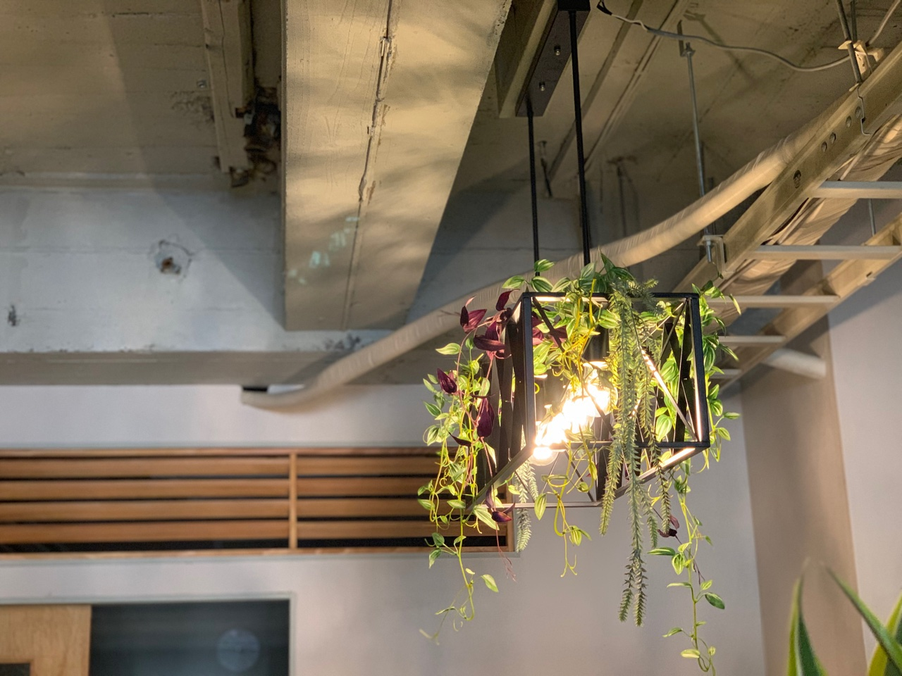 無機質な照明も植物の流線的なシルエットで柔らかさをプラス