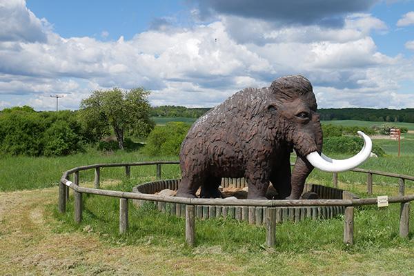 Ein Mammut und Wanderung zum Buchenwald Grumsin in der Schorfheide