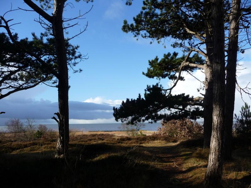 Blick aus dem Wernerwald auf die Nordsee