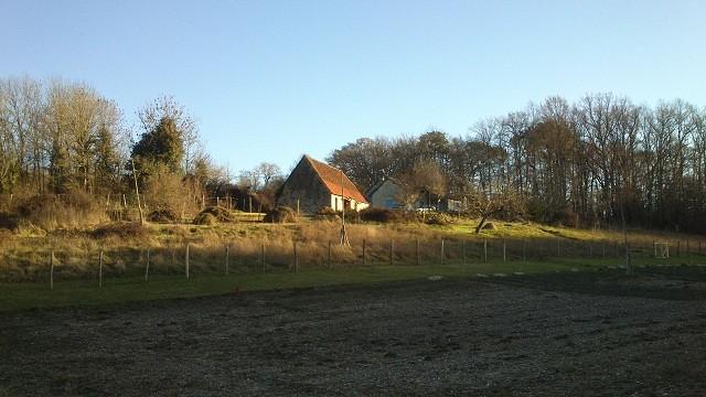 notre petite ferme de la borie blanche, safran du quercy , crocus,