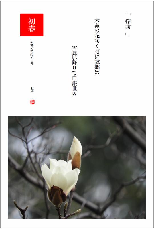 2017/03/11制作 庭の白木蓮