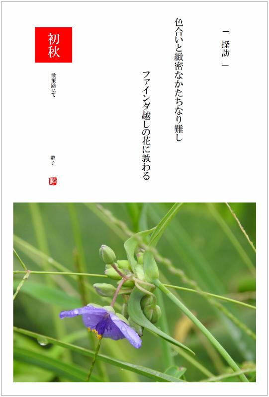 2016/10/21制作 散策路の大紫露草