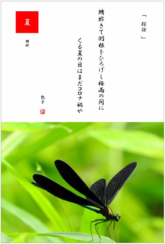 羽黒蜻蛉(はぐろとんぼ) 2021/07/10制作