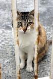Tierpensionen sind gegen die Katzennatur. Vor Ort Tierbetreuungs-Agentur Lorenz Noll