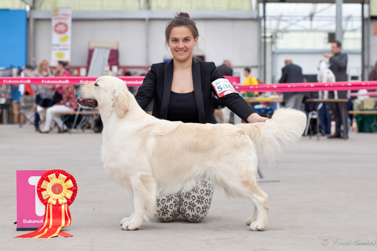 Jackson becoming Dutch Champion, March 2014, Judge: Mrs Gerda Groeneweg