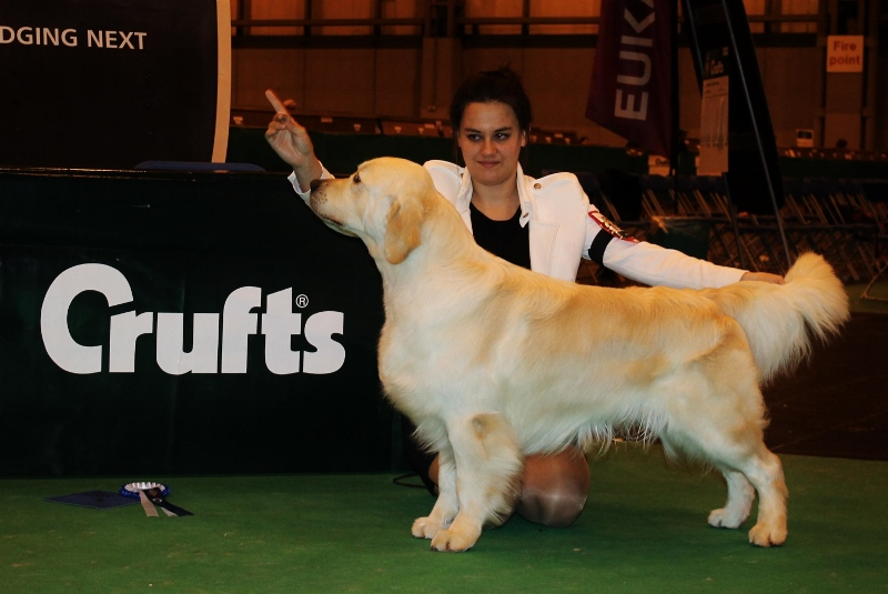 Jackson @ Crufts 2013, 2nd in Limit Dog, Judge: Mrs Janet Barrow