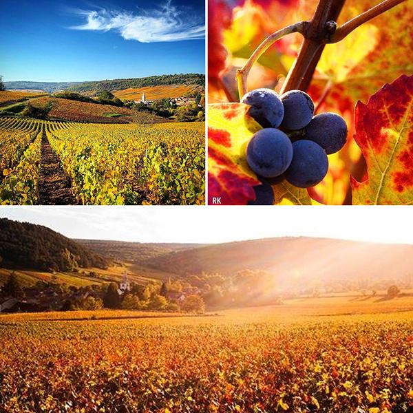 Vignoble en toutes saisons