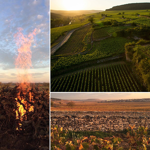 La nature en Bourgogne