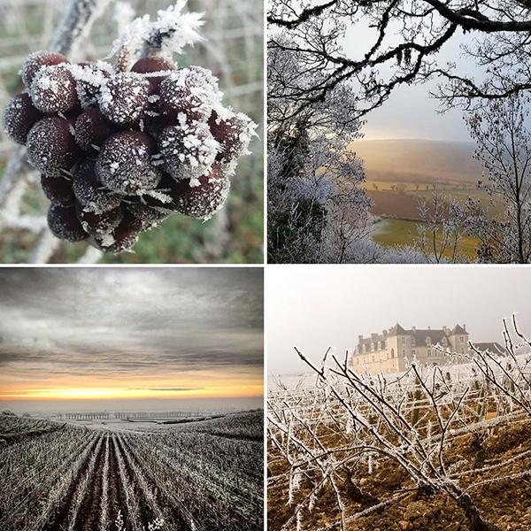 Les saisons du vignoble