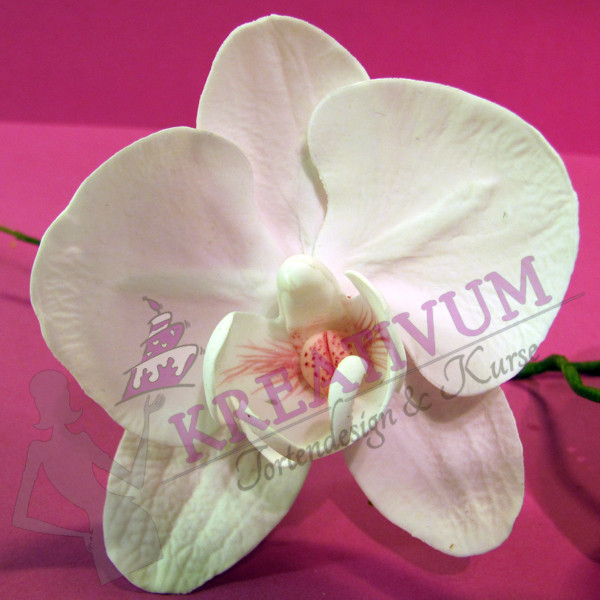 Zuckerblüten Kurs - Orchideen