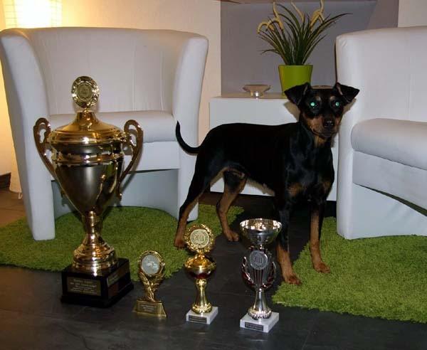 Multi CH, CIB, VWW-10 Shila Fame vom Dörnle, auch im Alter von fast 10 Jahren noch eine Siegerin BOB, Best Veteran + BIS3