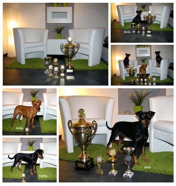 Arisa Banda Urwisow Landessieger 2011, Dark Angels Only one Covergirl Landesjugendsieger, Shila Fame vom Dörnle Landesveteranensieger + BOB, Best Veteran, BIS3