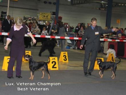 Internat. Show Luxembourg 2011 - Multi CH CIB VWW-10 Shila Fame vom Dörnle Luxembourg Veteran Champion + Best Veteran