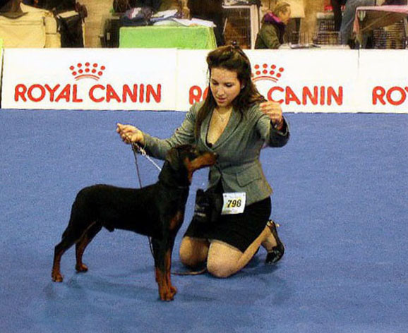 Dark Angels Phoenix Private Emotion - 9 Monate alt, Best Puppy, Best GP Male und BOB Best of Breed in Ancona / Italien 2011