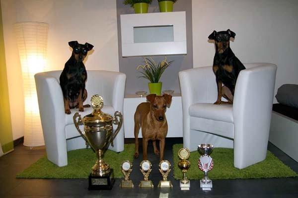 Erfolgreiche Landessieger Show 2011 in Saarbrücken