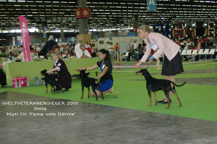 Weltsieger Ausstellung 2010 in Paris - Shila Weltveteranensieger