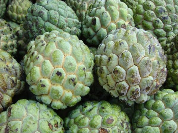 Frutas do conde