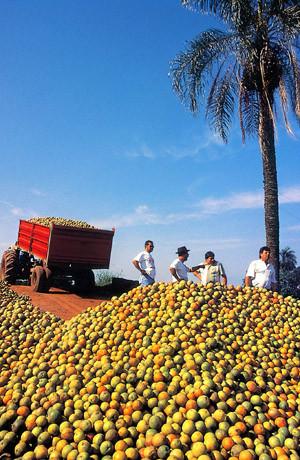 Orangenernte in Brasilien