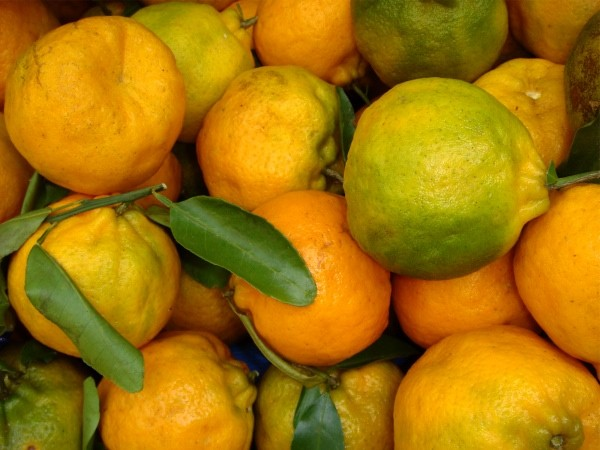 Tangarina pokan