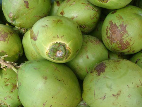 Coco - Kokosnuss