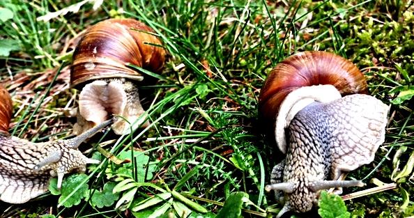 Schnecken Rennen - gara di lumache - snail race