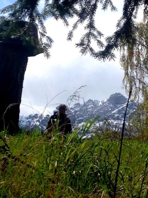 Frühling Südtirol + primavera Alto Adige + spring South Tyrol