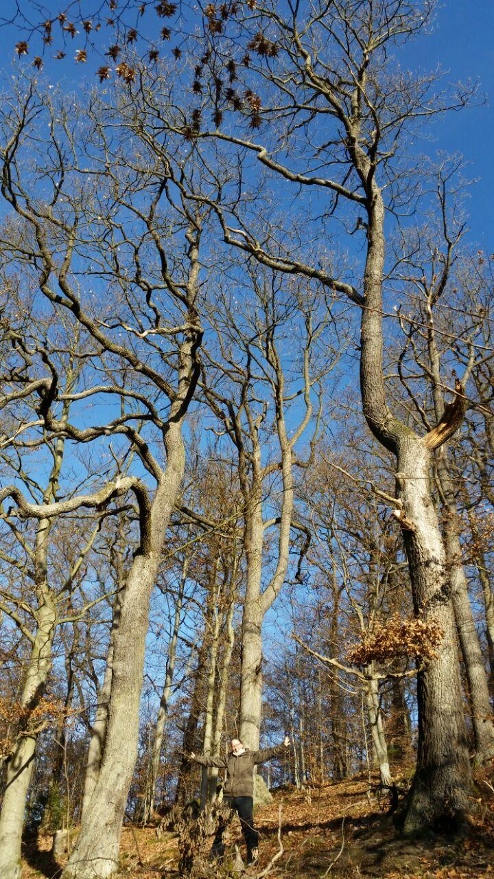 Altenbraker Wald im Herbst