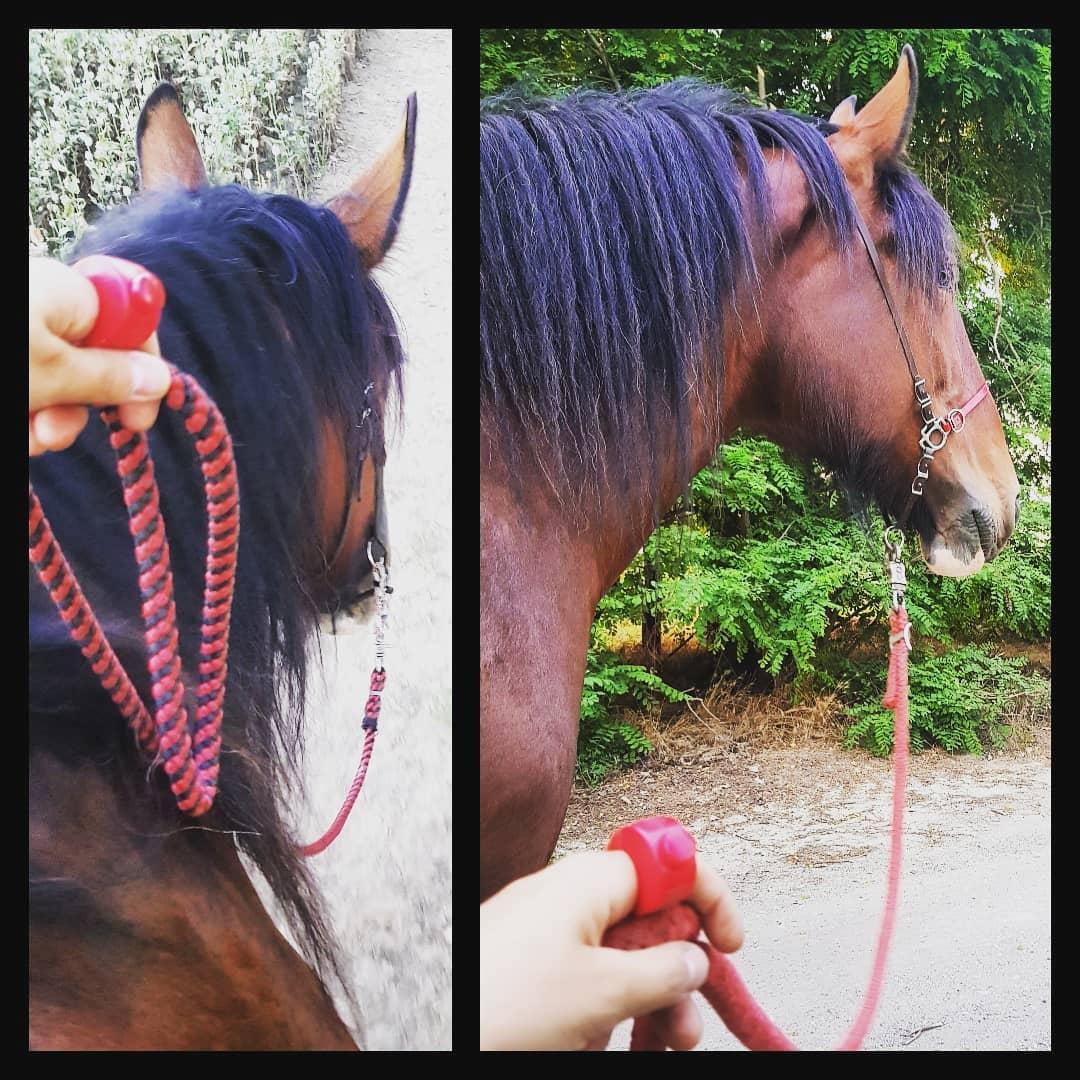 Clicino & Pferd