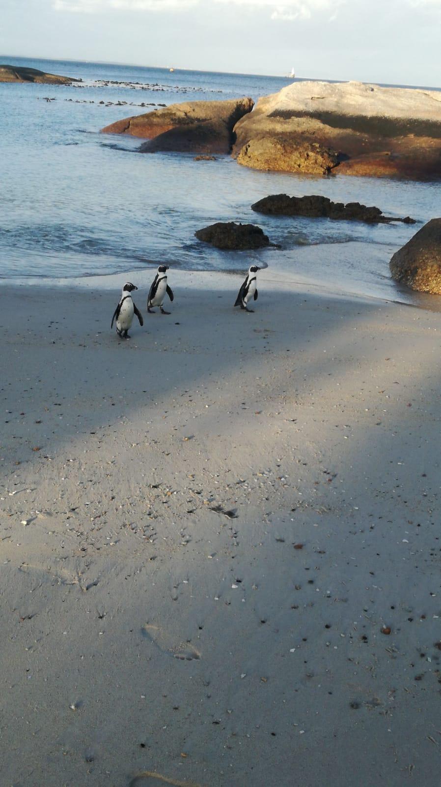 Ausflug zu den Pinguinen nach Kapstadt | Foto: Christoph Kahler