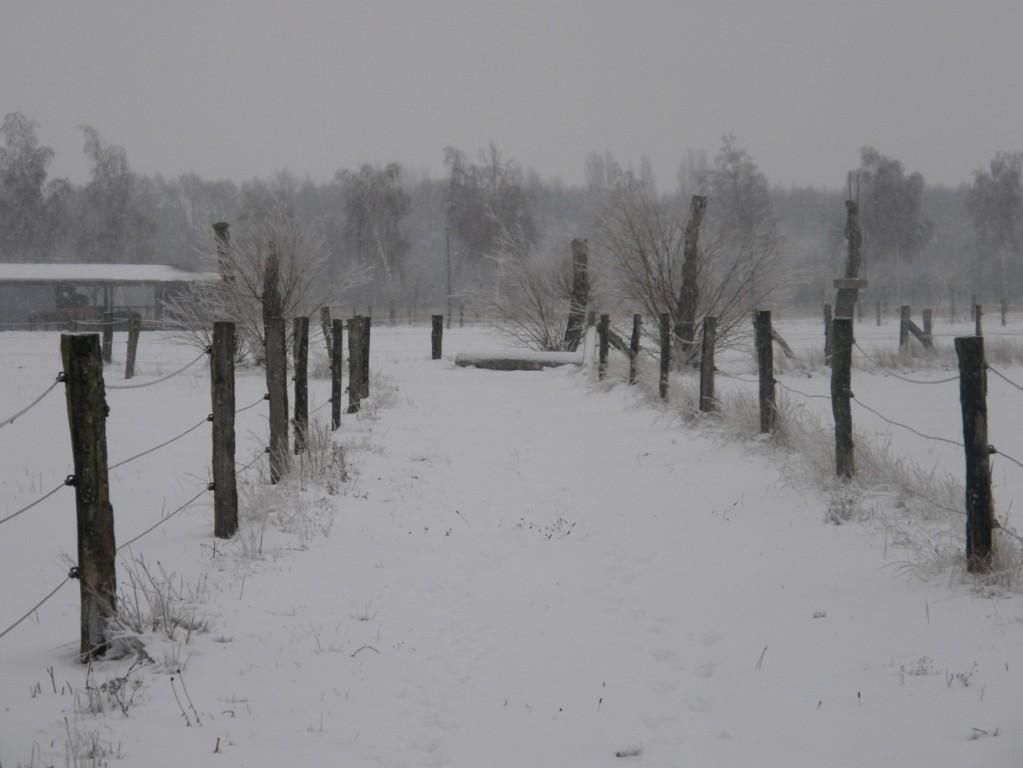 Weg zum Skulpturenkreis Neujahr 2010