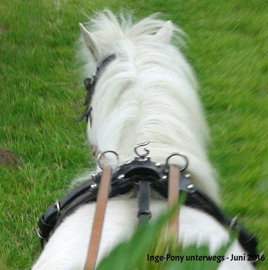 Inge-Pony unterwegs 2016