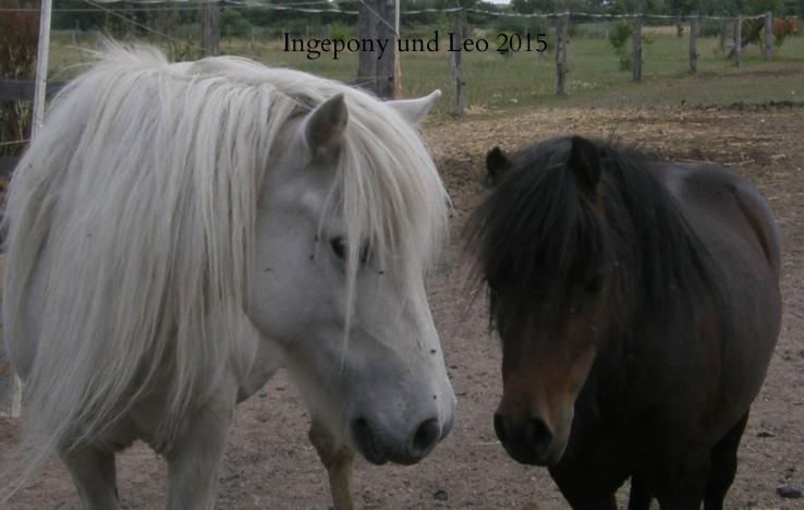 Inge-Pony und Leo Juli 2009