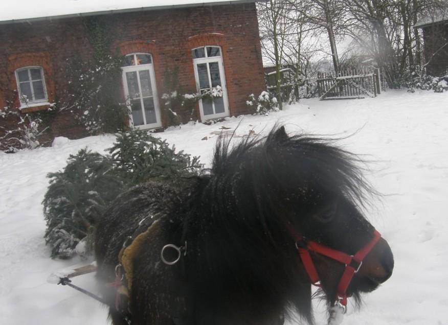 weihnachtliches Holzrücken mit Leo (Dez. 2010)